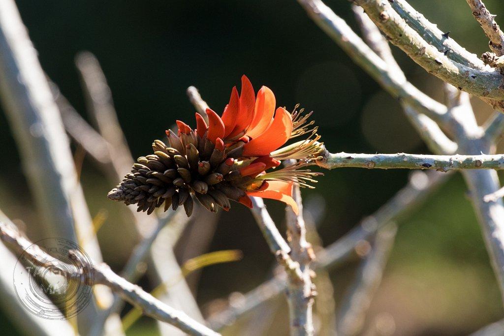 Winter in Kirstenbosch 9