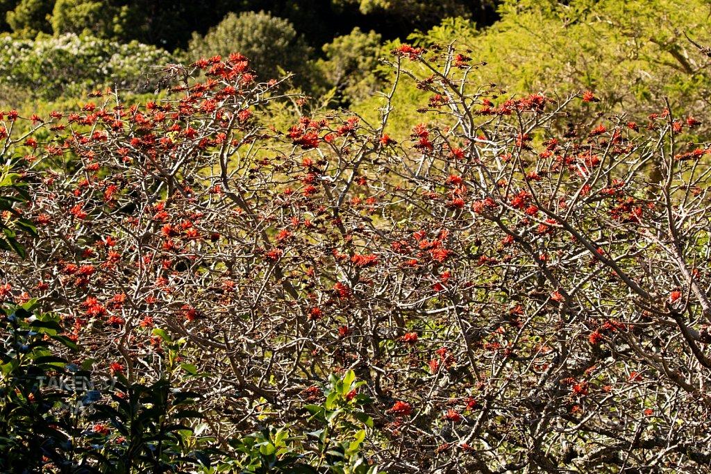 Winter in Kirstenbosch 10