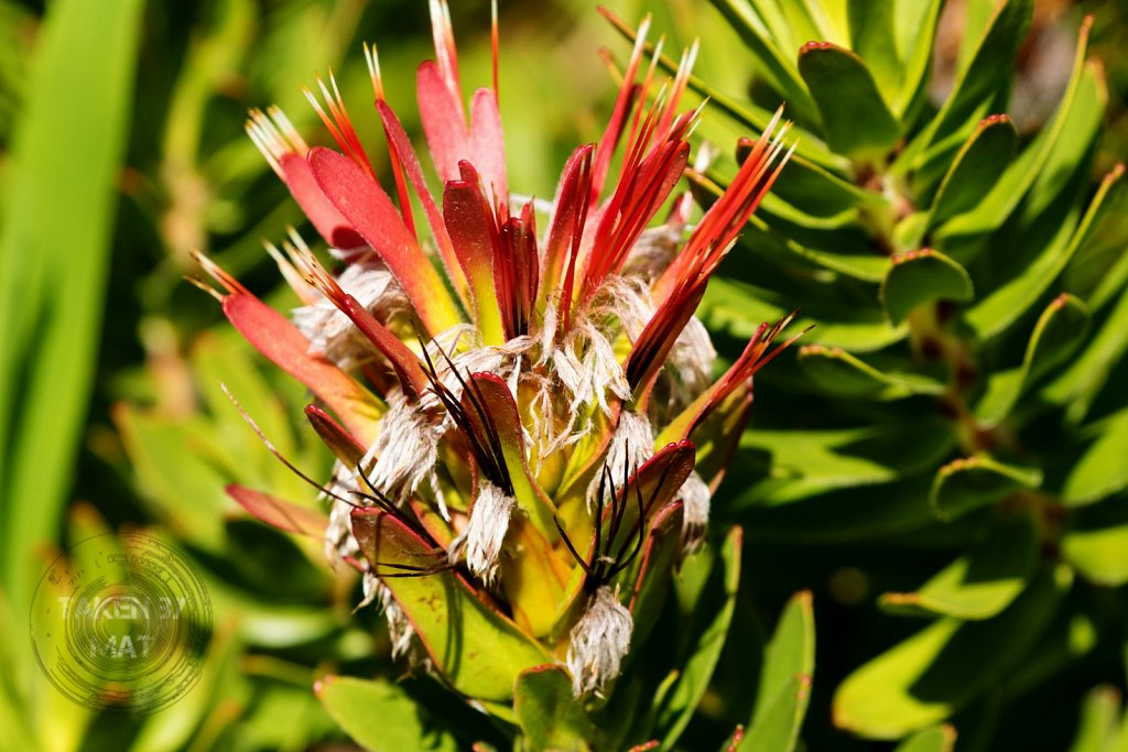 Winter in Kirstenbosch 17