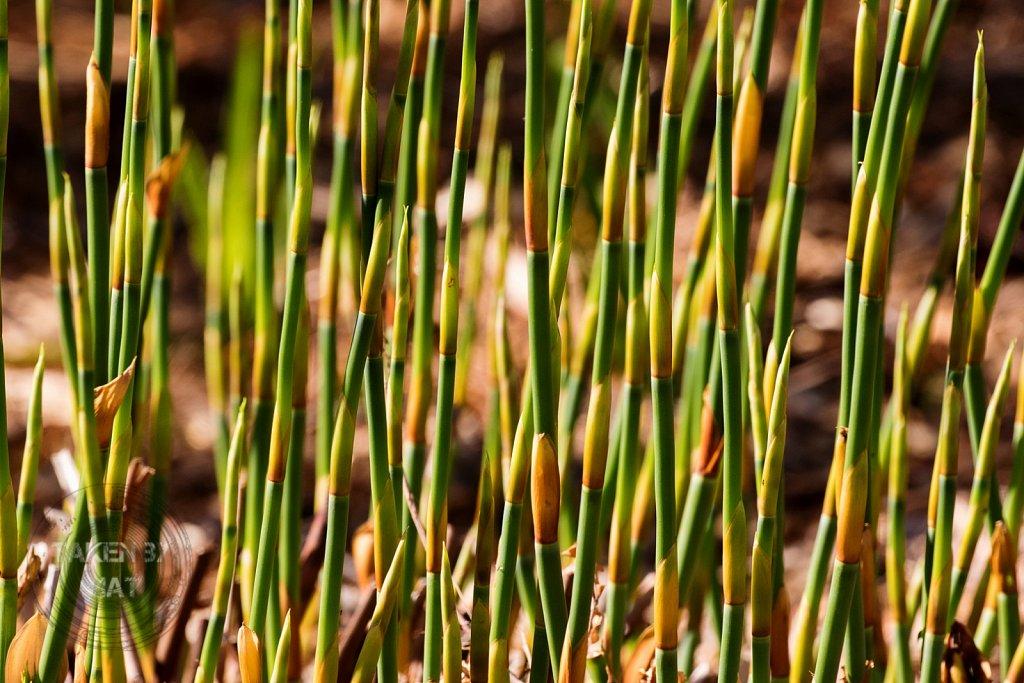 Winter in Kirstenbosch 20