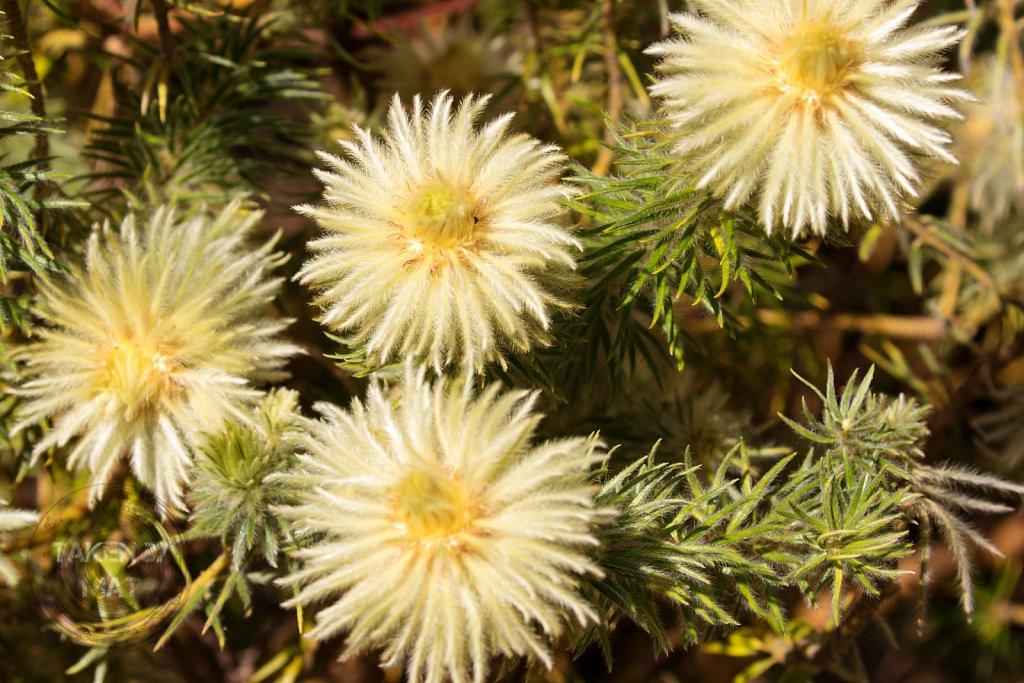 Winter in Kirstenbosch 26