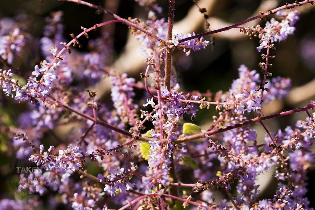 Winter in Kirstenbosch 29