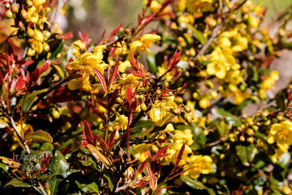 Winter in Kirstenbosch 33